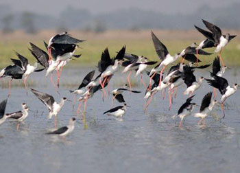 Chilika Lake and Bird Sanctuary Tour of Odisha