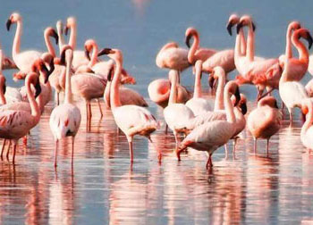 Odisha Golden Triangle with Chilika Lake Tour