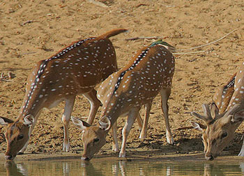 Wildlife Tours in Odisha
