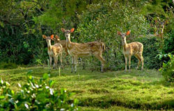 Wildlife in Odisha