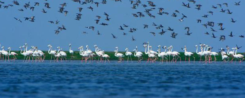 holiday-tour-packages-in-odisha