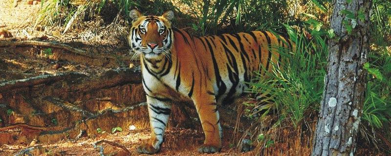 satkosia-tiger-reserve