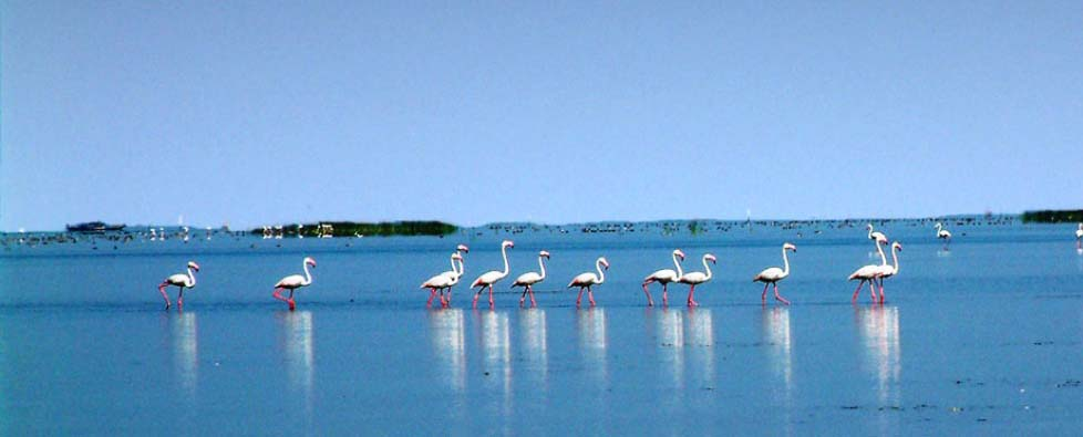 chilika-lake-bird-sanctuary