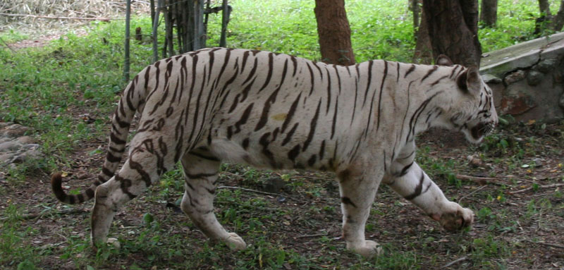 wildlife-tour-package-in-odisha